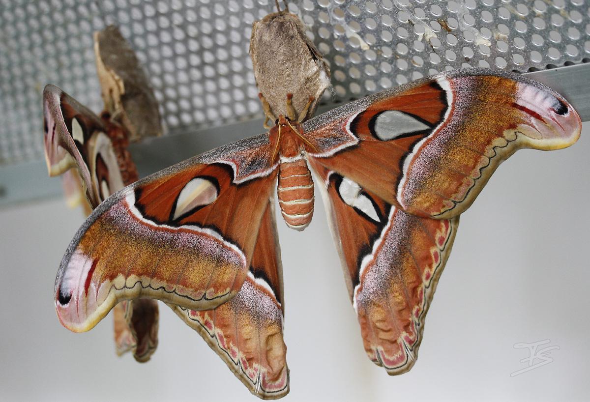 Butterfly 9638