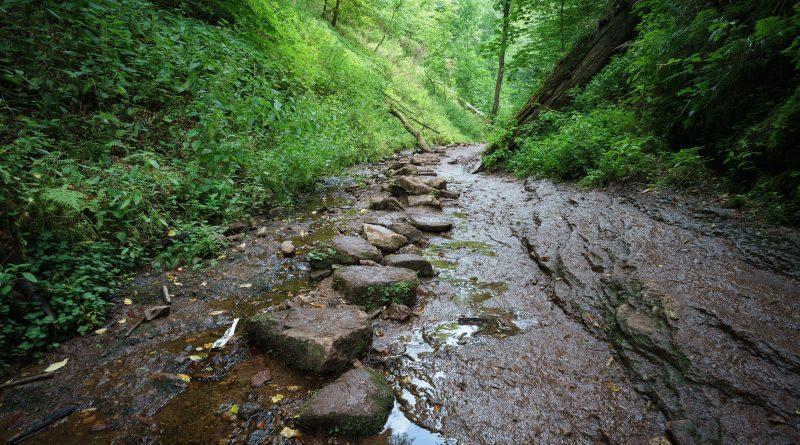 Wanderungen im Thüringer Wald